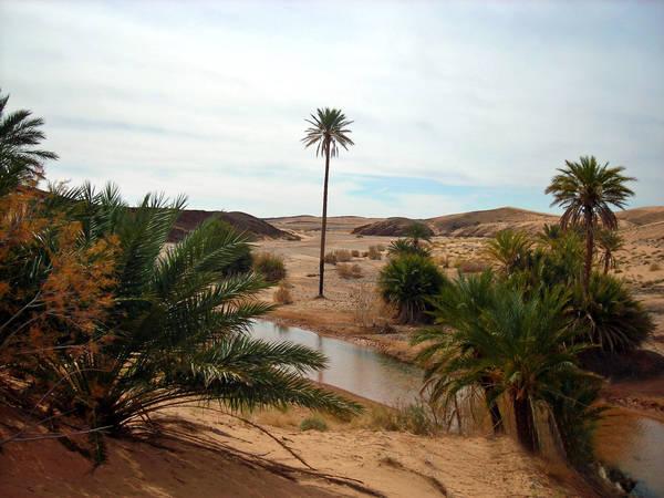 wüste am meer